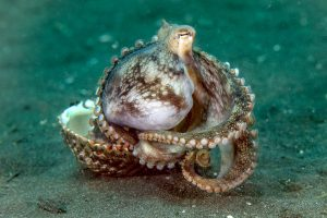 Octopus Curled Up