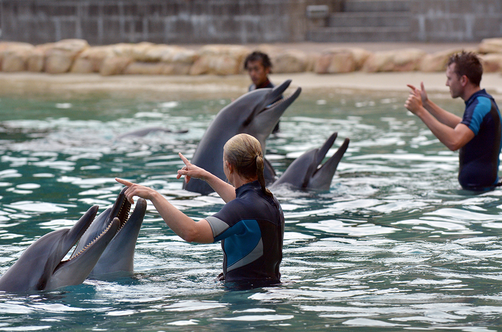 People Training Dolphins