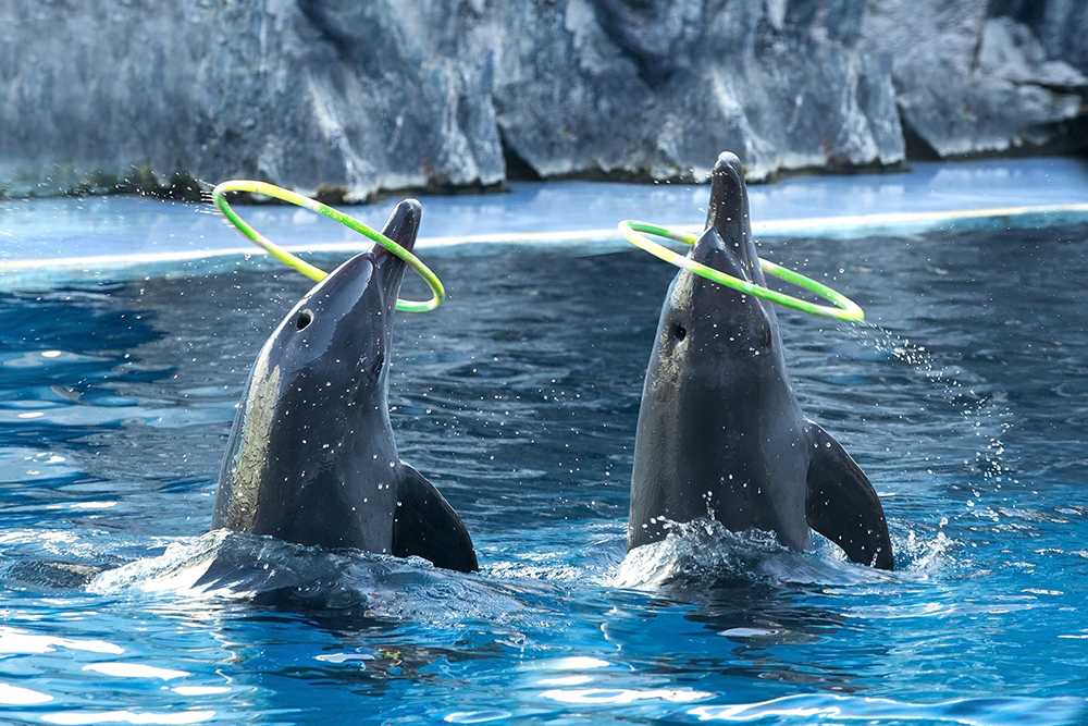 The Plight of Dolphins and Killer Whales In Captivity (Part One)